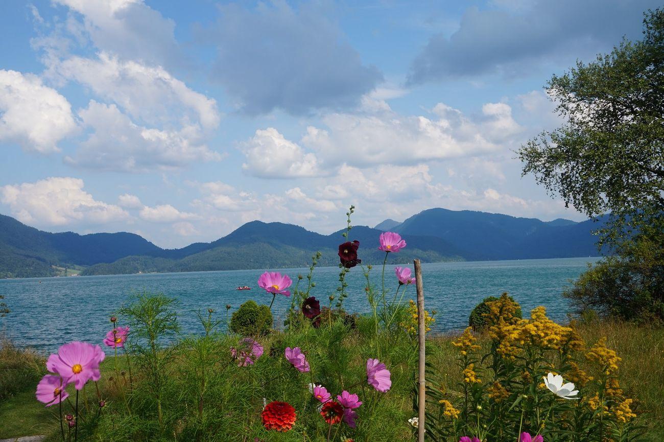 walchensee flowers