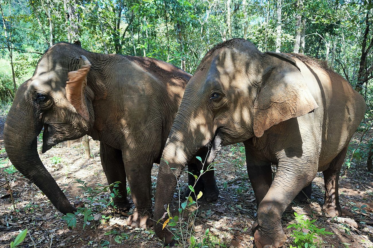 Exploring Cambodia's Wild East – Mondulkiri