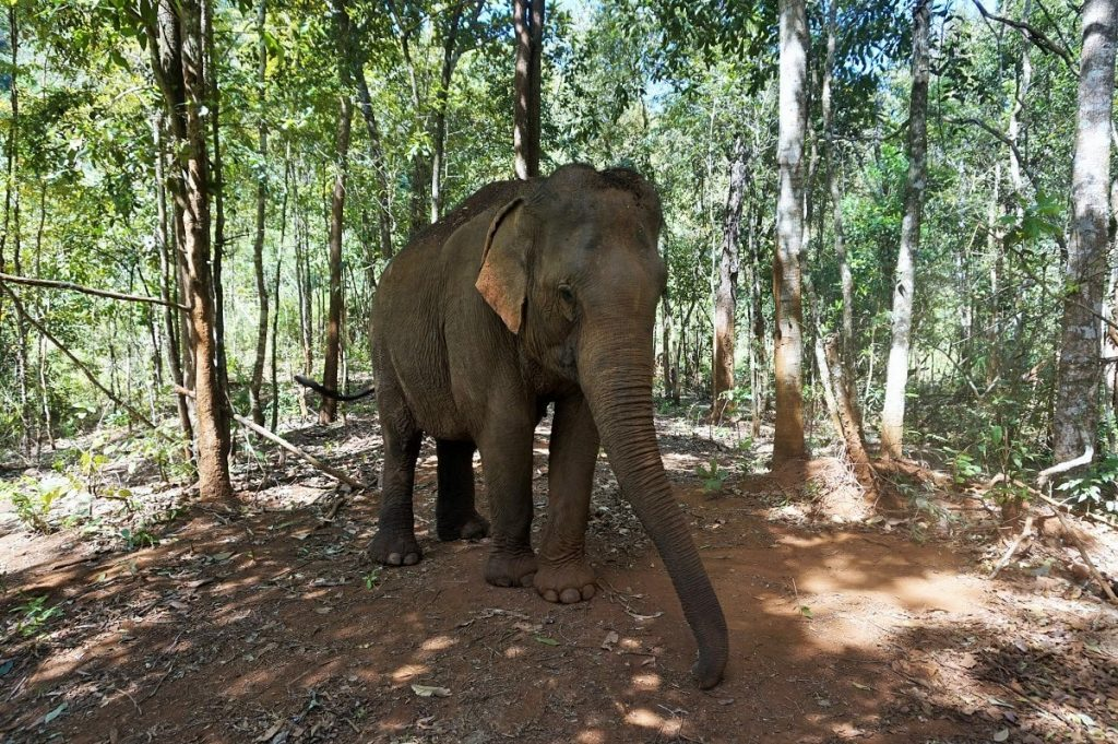 mondulkiri project 01