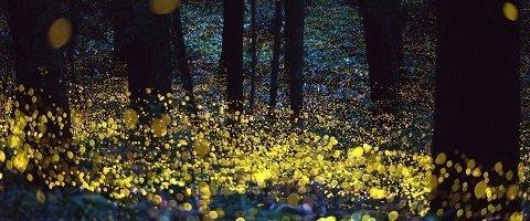 santuario de las luciernagas en tlaxcala