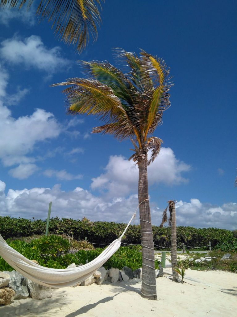 isla cozumel palm tree and hammock